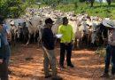 Fiscais resgatam grupo que levava gado a pé em trecho de 930 km na Transamazônica